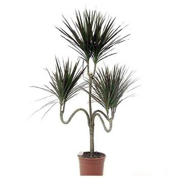 Готовые комплекты растений купить в Москве  Компания