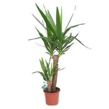Комнатные лиственные растения